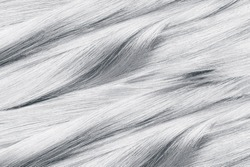 Curled gray hair as background, texture