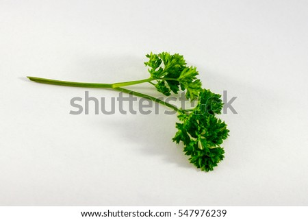Shutterstock Curly Leaf Parsley