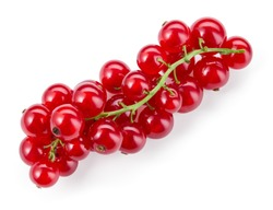 Currants on branch. Red currant isolated. Currant red on white background. Top view. Currants on white.