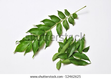 curry leafes from farm