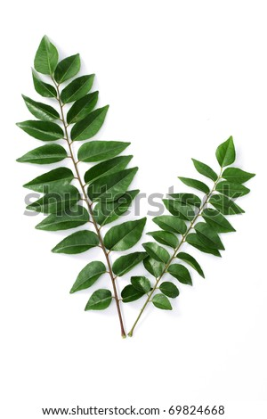 Curry leaves on white