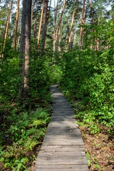 Curved road in the forest between trees. Planking trail in the forest. Green grass grows along the edges of a winding road in the forest.