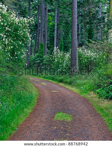 Curved road through a wooded forest with green grass, trees and shrubs