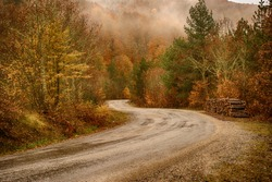 curved roads in autumn leaf and natural