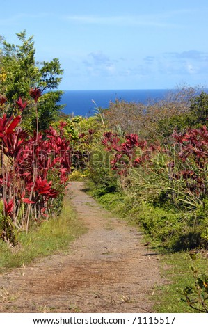 Curving and twisting path leads through tall tropical foliage on the Big Island of Hawaii.  Vivid red Ti Plants line path that leads toward a blue ocean and horizon.