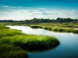 Curving blue river flowing through the green swamp on Cape Cod Island