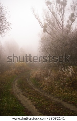 Curving path in misty forest with fog.