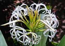 Curvy Flowers of