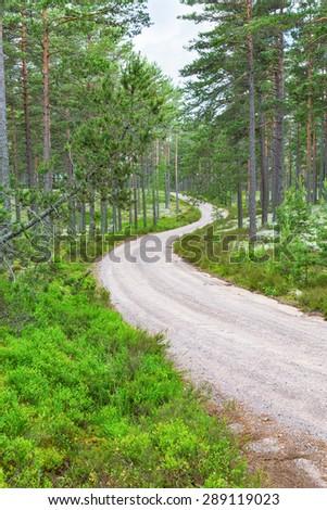 Curvy gravel road through the forest landscape