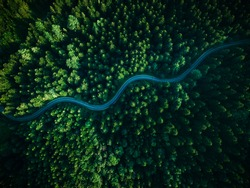 Curvy Road in Dark Wild Woodlands. Top Down Drone View. Outdoor Adventure Road Trip.