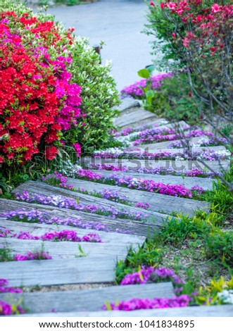 Curvy, short flight of steps with colourful flowers and plants on the steps as well as on the sides of the stairway in South Korea's