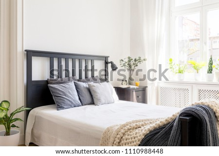 Cushions and blanket on bed with black headboard in bedroom interior with plant. Real photo #1110988448