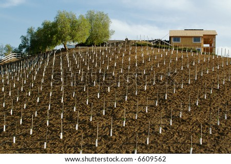 Custom country Home Site on a Hill with Citrus Tree Sprouts.