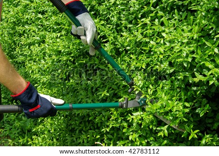 cut a hedge