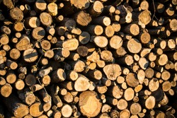 Cut and stacked woods. Pile of woods background. Wood background.