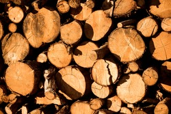 Cut and stacked woods. Pile of woods background. Wood background. Close up of cut woods.