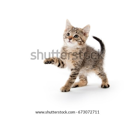 Cut baby tabby kitten playing and swinging its paws on white background - Shutterstock ID 673072711