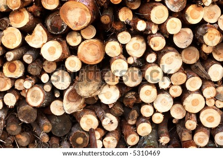 Cut down trees being put one on another - stock photo