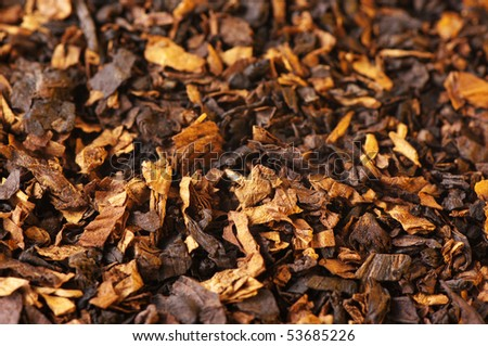 Cut dried leaves of tobacco as background.
