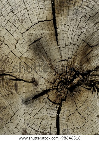 cut end of wood with signs of saw marks