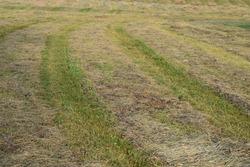 Cut grass in a hay field