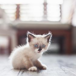 Cut kitten at home. Little fun cat