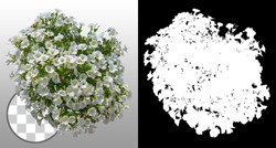 Cut out flowers. White flowers isolated on transparent background via an alpha channel. Hanging flowers basket. Flower bed for garden design or landscaping. High quality clipping mask.