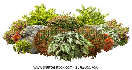 Cut out garden design isolated on white background. Flowering shrub and green plants for landscaping. Decorative shrub and flower beds. High quality clipping mask. Stock photo ©