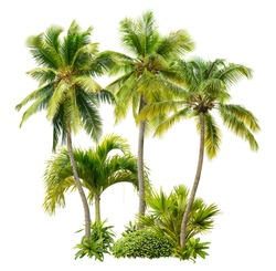 Cut out palm grove. Palm tree isolated on white background. Coconut tree. High quality image for professional composition.