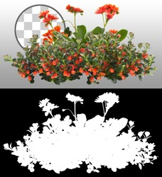 Cut out red flowers. Flower bed isolated on transparent background via an alpha channel. Bush for garden design or landscaping. High quality clipping mask.