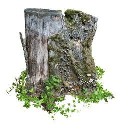 Cut out tree stump. Mossy tree. Old tree stub surrounded by green foliage. Dead tree isolated on white background. High quality clipping mask.