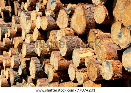 Cut Pine Logs Background