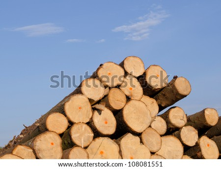 Cut spruce fir tree logs in pile on background of blue sky. Timber industry.