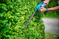 Cut the hedge with the hedge trimmer