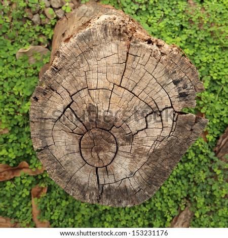 cut timber or sawed timber