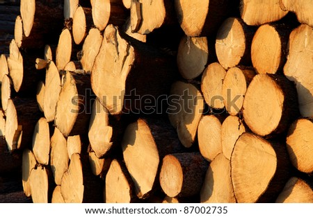 cut trunks of pine tree on stock