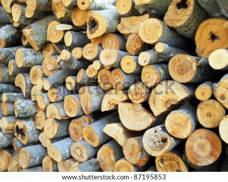 Cut trunks of wood