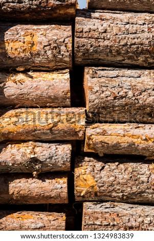 Cut wood in Madrid, Spain.
