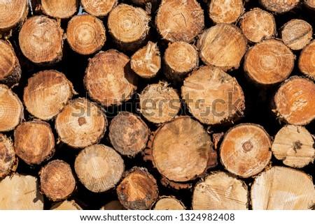 Cut wood, Madrid.