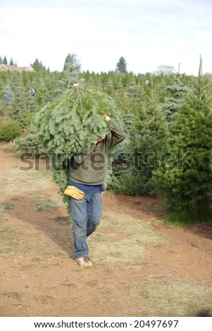 Cut your own christmas tree lot in the mountains