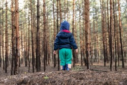 Cute adorable caucasian lonely toddler baby boy standing alone on hill during walk in fall coniferous pine woods at day time. Child lost in forest. Curious kid discover nature and world. Back view