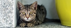 Cute adorable funny small tabby kitten sitting in dark corner while hunting or stalking outdoors. Beautiful young little cat playing at home backyard