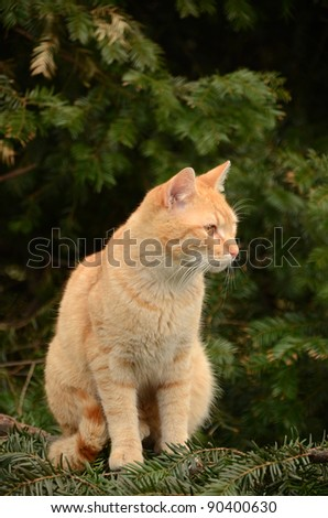 Cute adult cat sitting on a tree