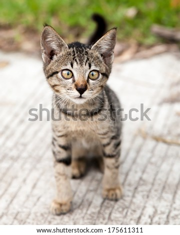 Cute and funny stray cross-eyed tabby kitten sitting on the road in the Philippines
