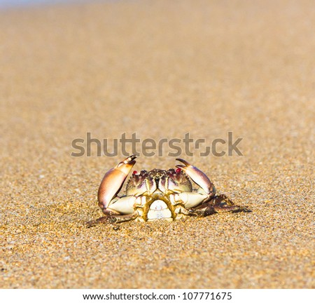Cute Animal Alien Creature - stock photo