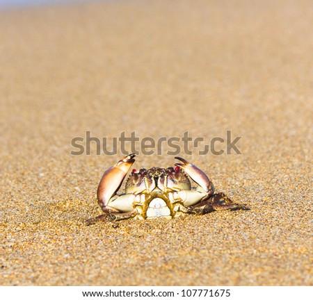 Cute Animal Alien Creature