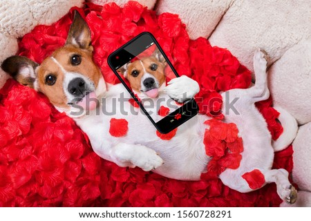 Cute animals and cute puppy dog #1560728291