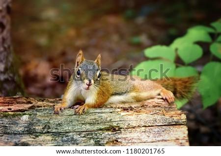 cute animals   cute squirrel #1180201765