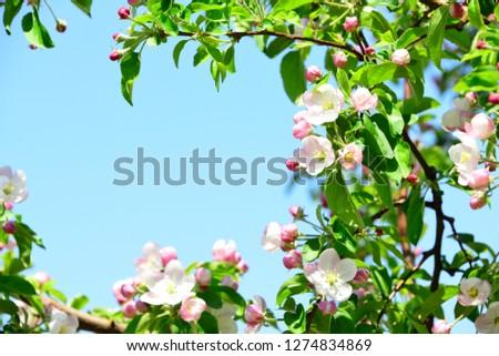 cute apple flower #1274834869
