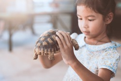 Cute asian child girl holding and playing with turtle with curious and fun. She is not scared to hold it on hand.